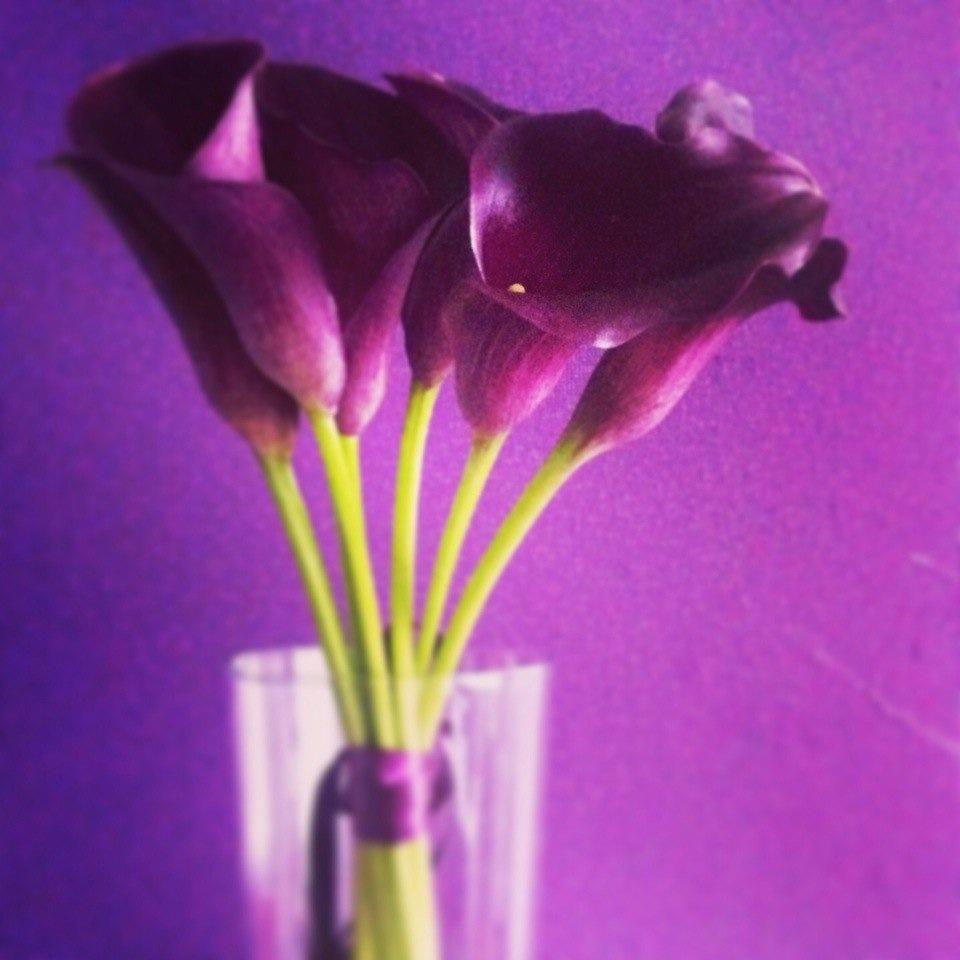Цветы Ани